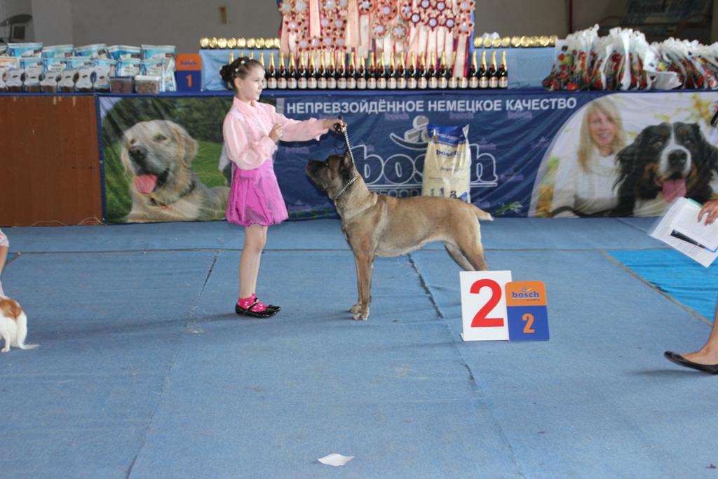 екатеринбург фото выставки собак
